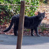Wyckoff Issues Warning After Feral Cat Tests Positive For Rabies