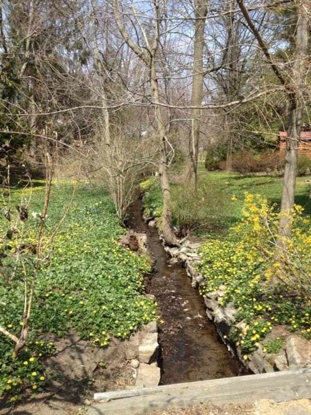 A brook near Ashley Avenue and Farragut Avenue in Hastings-on-Hudson welcomes spring.